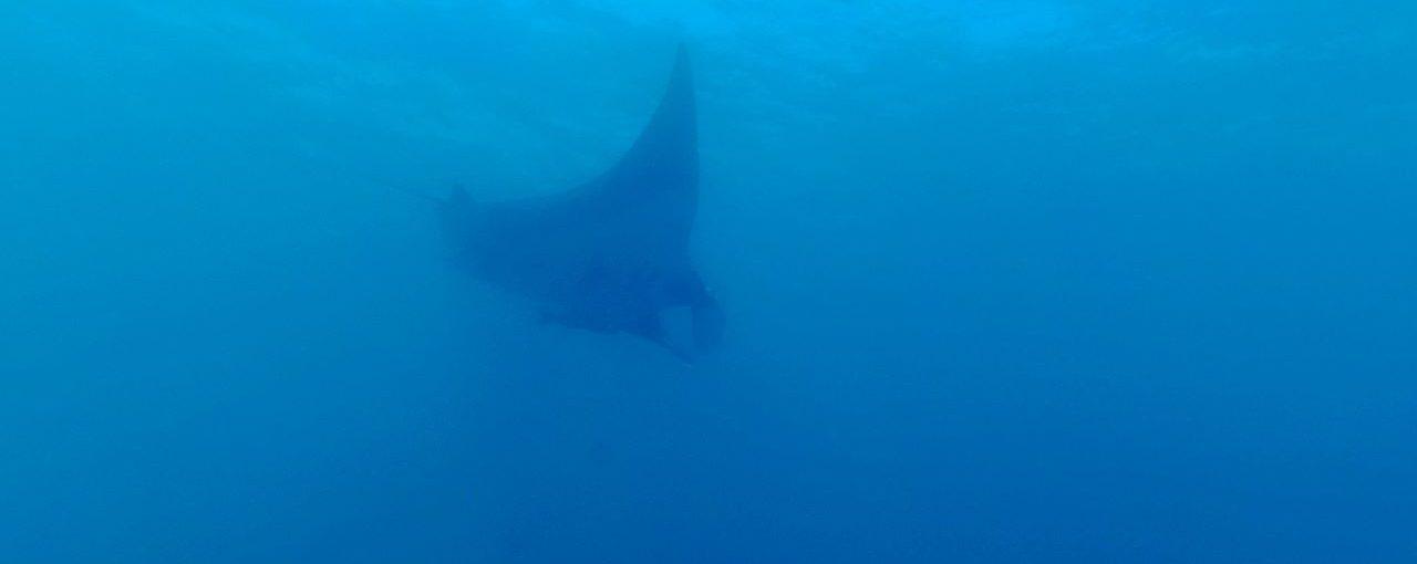 Où plonger au Costa Rica ? Episode 2 : Playa Del Coco