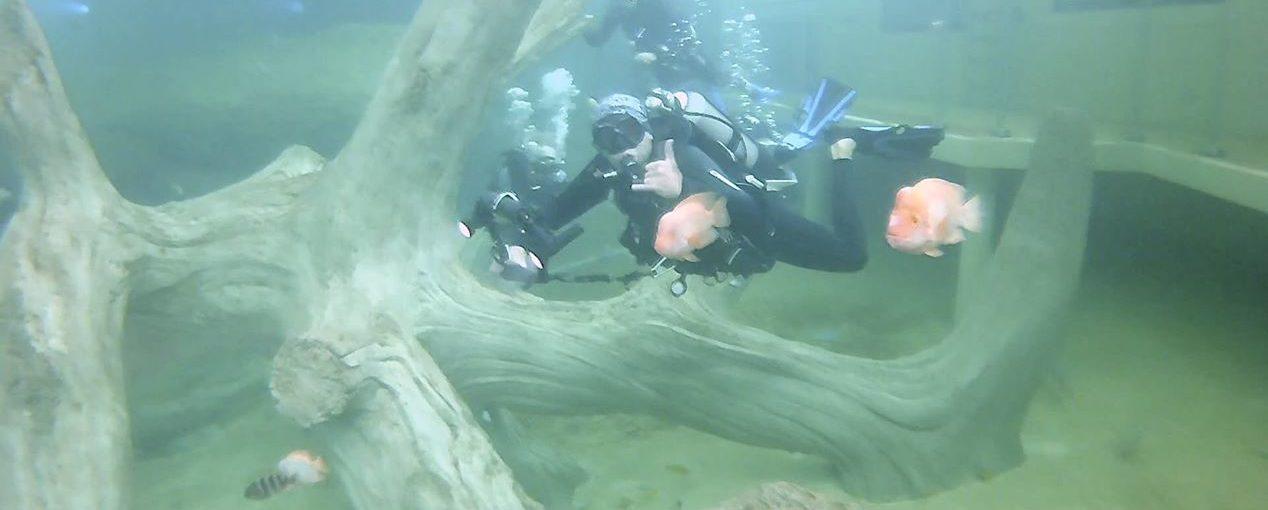 Nomad Diver a tenté l'expérience TODI