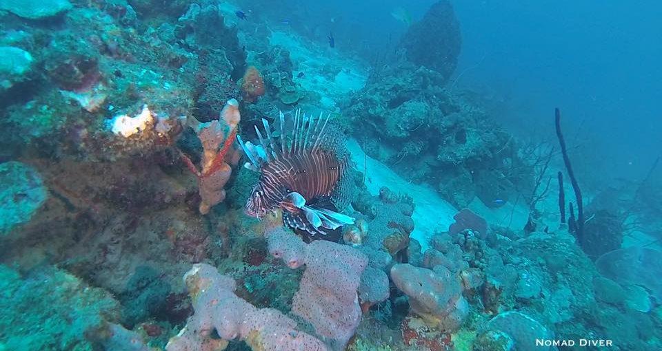Pourquoi pas vous rendre en Guadeloupe ? Aventure Caraïbe Episode 1